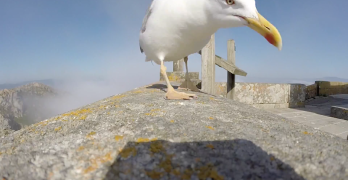 Watch This Bird Steal A GoPro