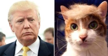 The Best #TrumpYourCat Photos