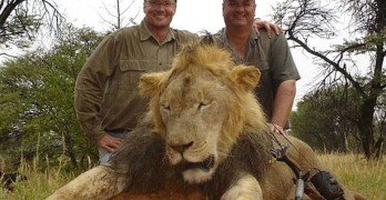 [Fake] River Bluff Dental Trolls Internet With Twitter Feed #CecilTheLion