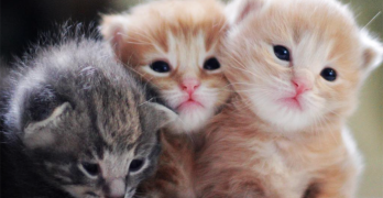 These Kittens Live To Be Cute